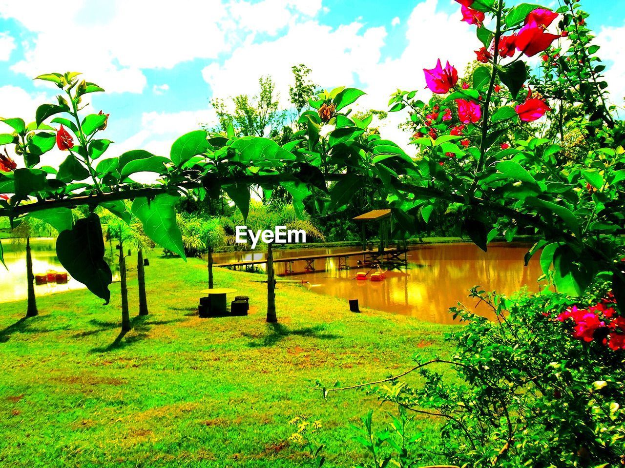 growth, tree, nature, beauty in nature, green color, flower, plant, outdoors, day, no people, grass, sky