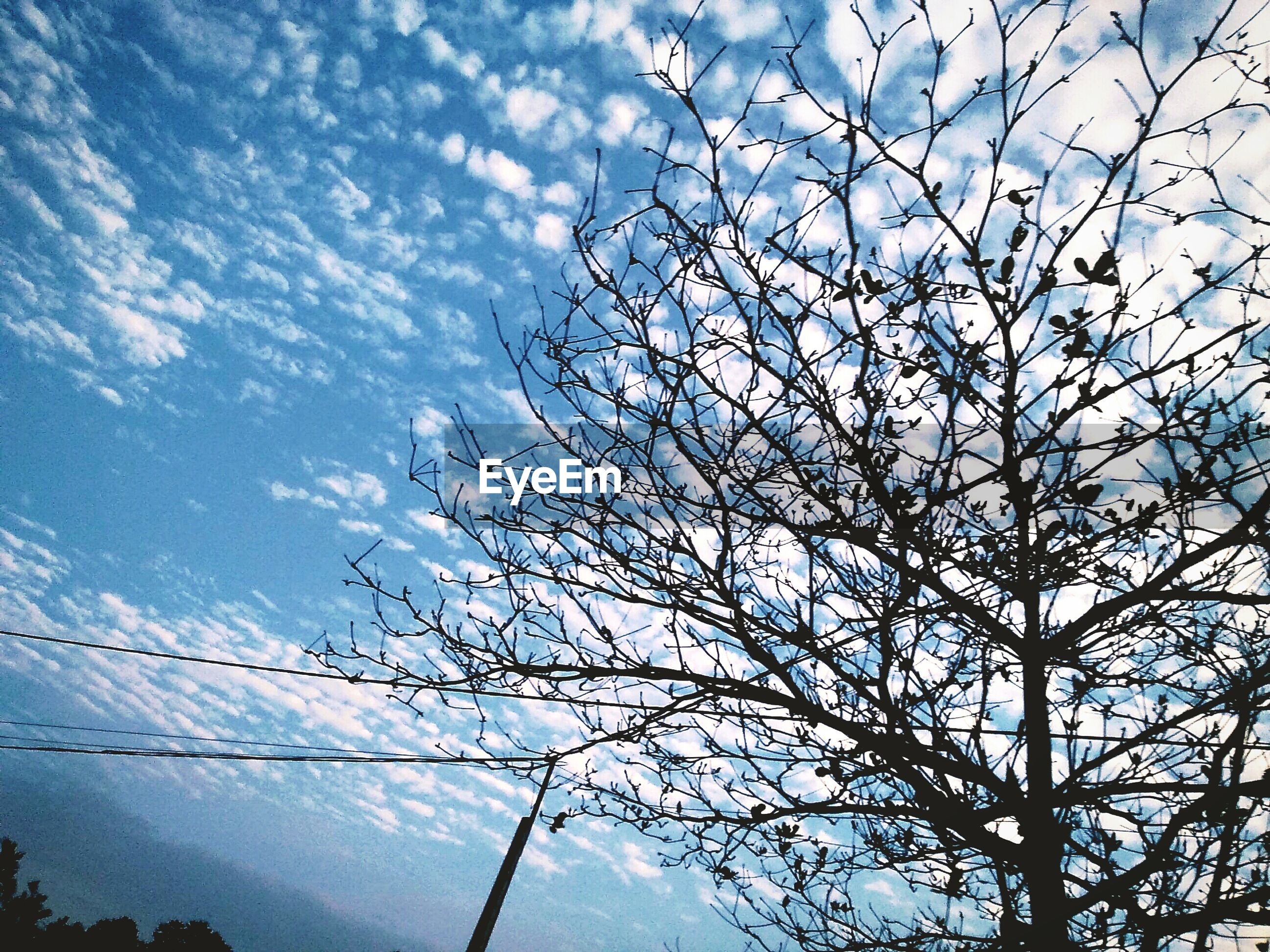 sky, tree, nature, beauty in nature, low angle view, no people, cloud - sky, growth, branch, outdoors, day, close-up