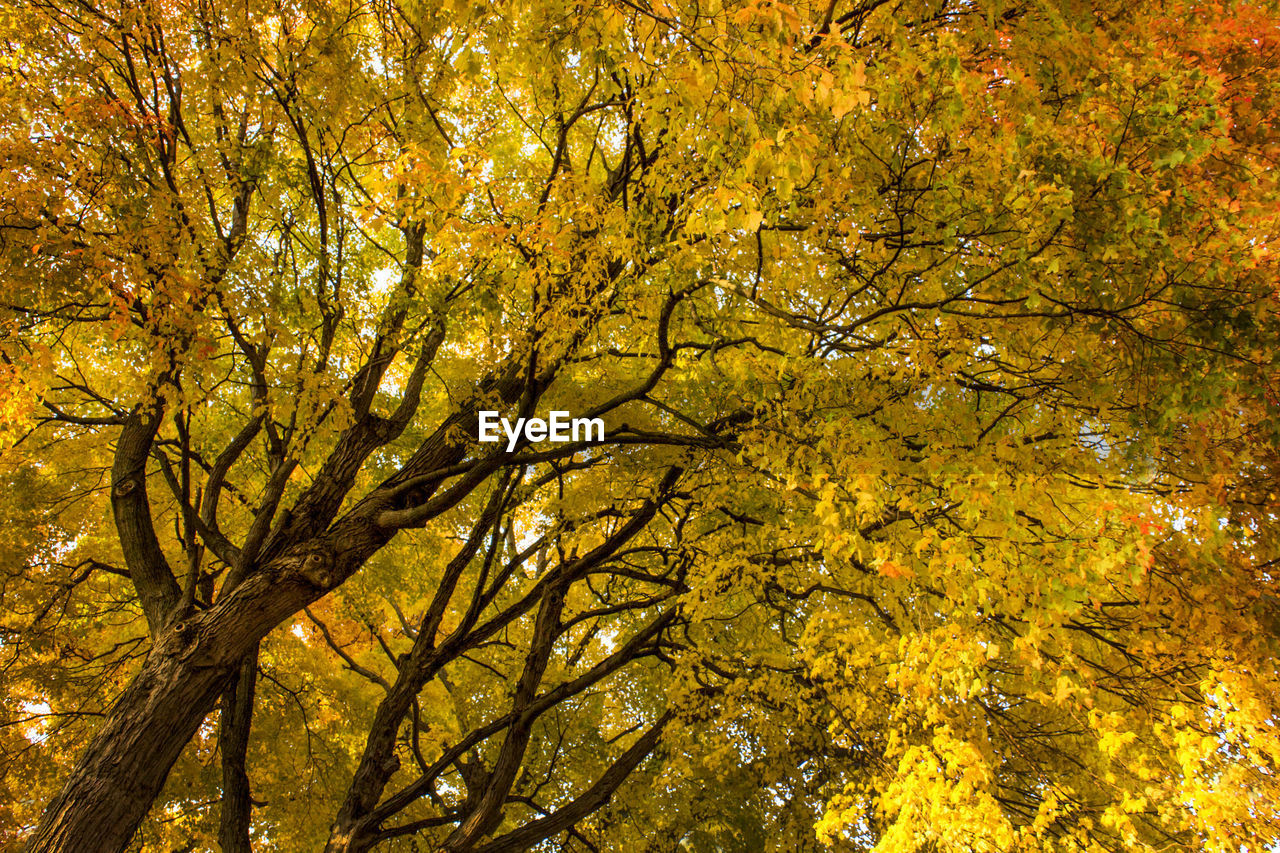 tree, autumn, nature, leaf, yellow, beauty in nature, branch, outdoors, low angle view, scenics, change, growth, no people, day, forest, deciduous tree, freshness, sky