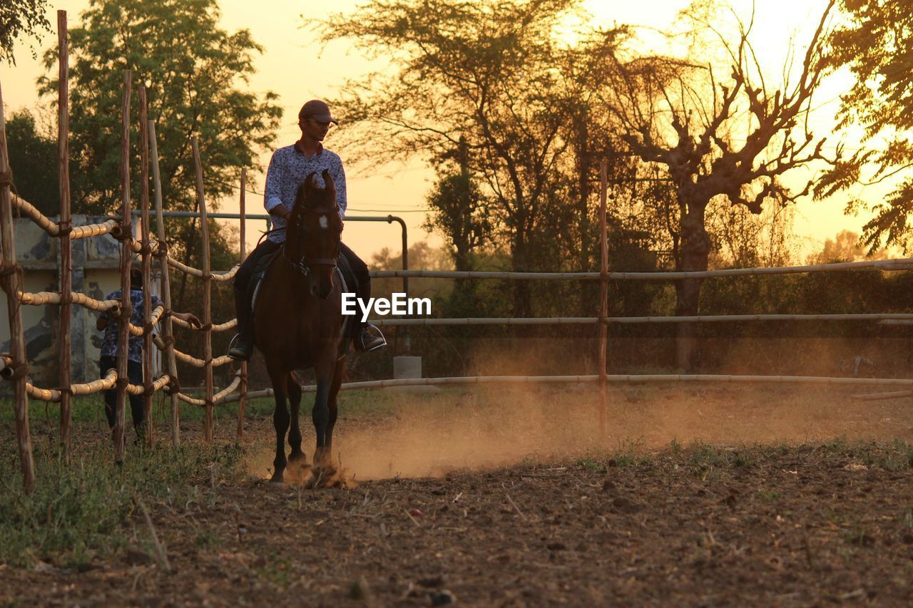 livestock, mammal, domestic animals, tree, animal themes, horse, animal, pets, vertebrate, domestic, animal wildlife, one person, real people, plant, full length, lifestyles, riding, one animal, leisure activity, ride, herbivorous, outdoors, ranch