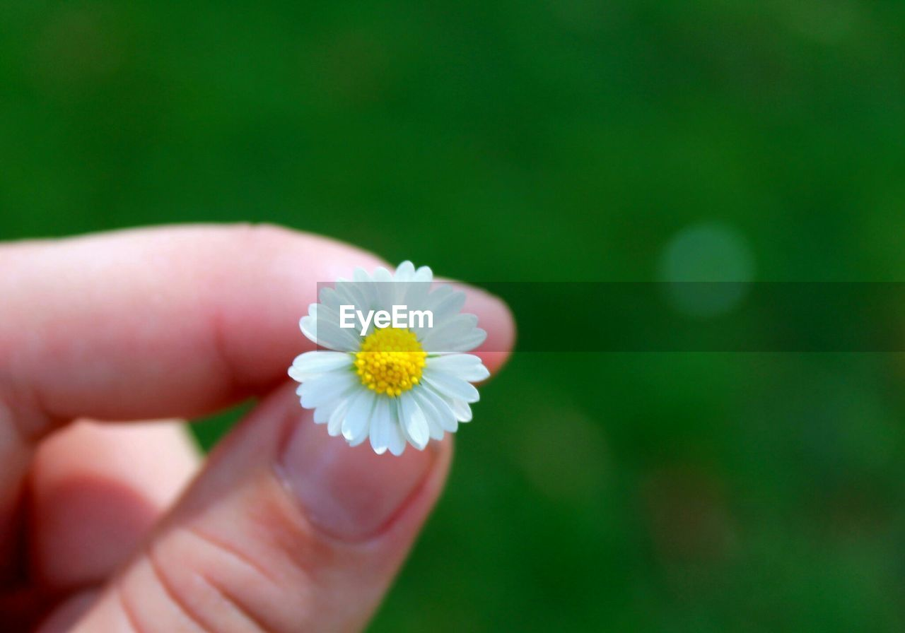 human hand, flower, human body part, one person, holding, real people, human finger, petal, beauty in nature, fragility, close-up, nature, flower head, outdoors, freshness, focus on foreground, day, people