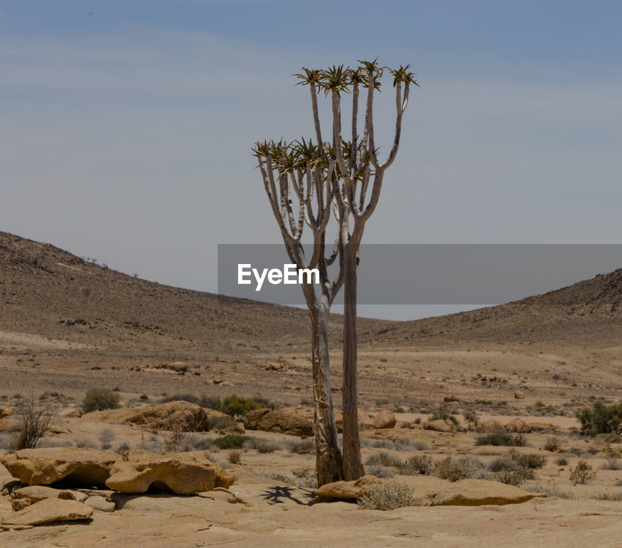 desert, sky, environment, land, landscape, scenics - nature, beauty in nature, climate, tranquility, tranquil scene, plant, arid climate, nature, non-urban scene, no people, remote, day, sand, horizon over land, clear sky, outdoors, semi-arid