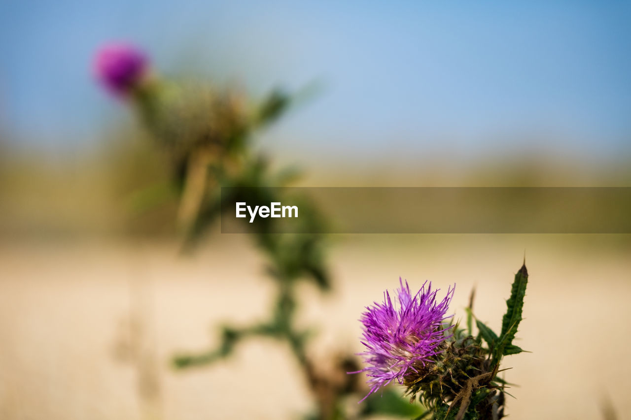 flowering plant, flower, plant, beauty in nature, vulnerability, growth, freshness, fragility, focus on foreground, nature, close-up, flower head, purple, day, inflorescence, petal, no people, selective focus, sky, outdoors, sepal