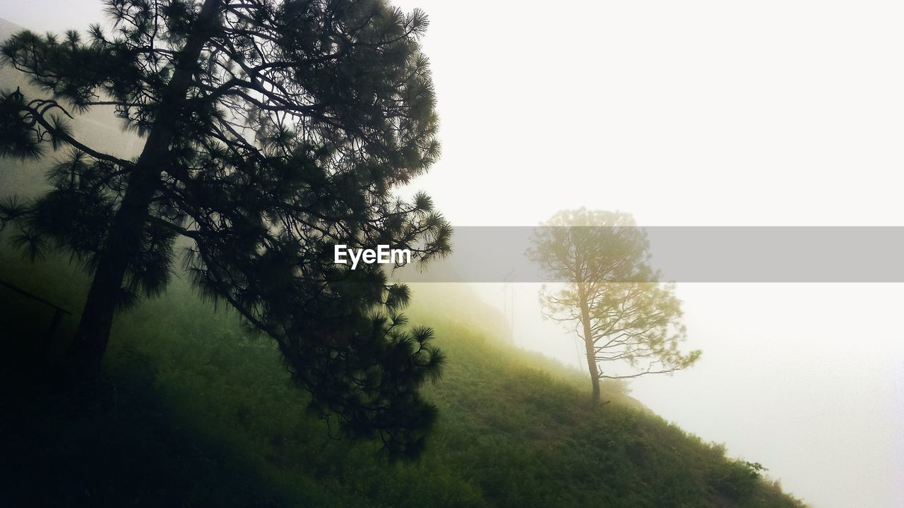 tree, plant, fog, tranquility, beauty in nature, sky, no people, nature, tranquil scene, growth, day, land, scenics - nature, environment, non-urban scene, outdoors, branch, landscape