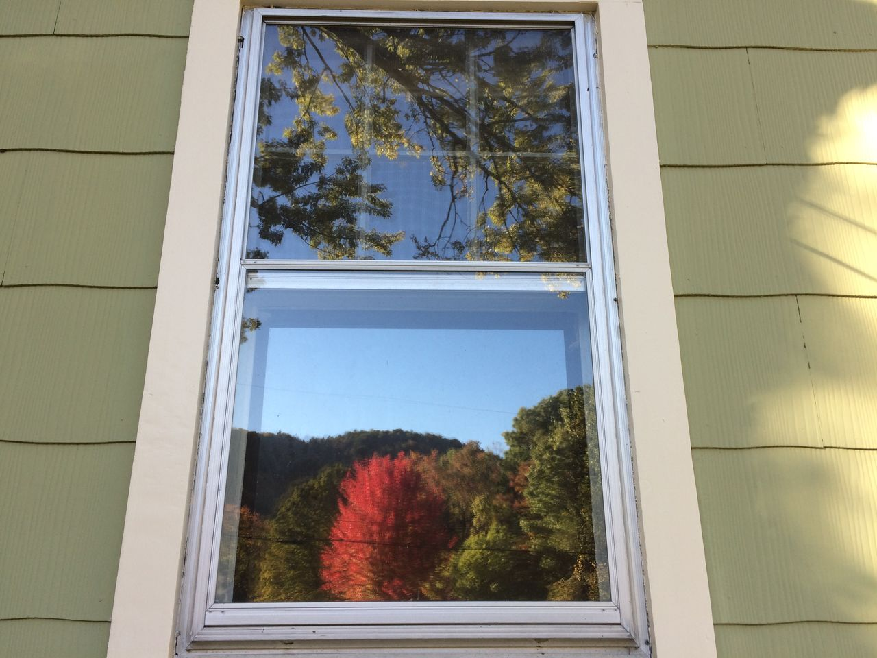 REFLECTION OF TREES IN FRONT OF WINDOW GLASS