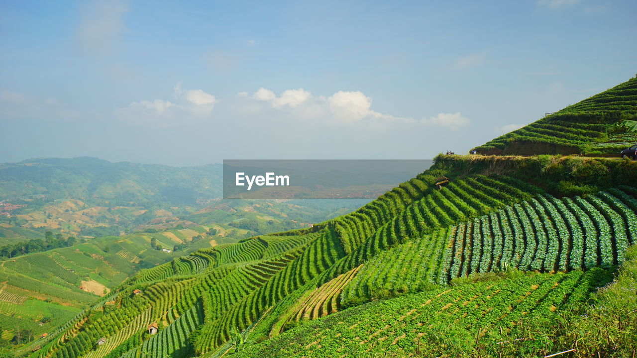 agriculture, scenics - nature, beauty in nature, growth, green color, landscape, plant, field, rural scene, farm, land, sky, tranquil scene, environment, crop, tranquility, nature, no people, cloud - sky, day, plantation, tea crop, outdoors