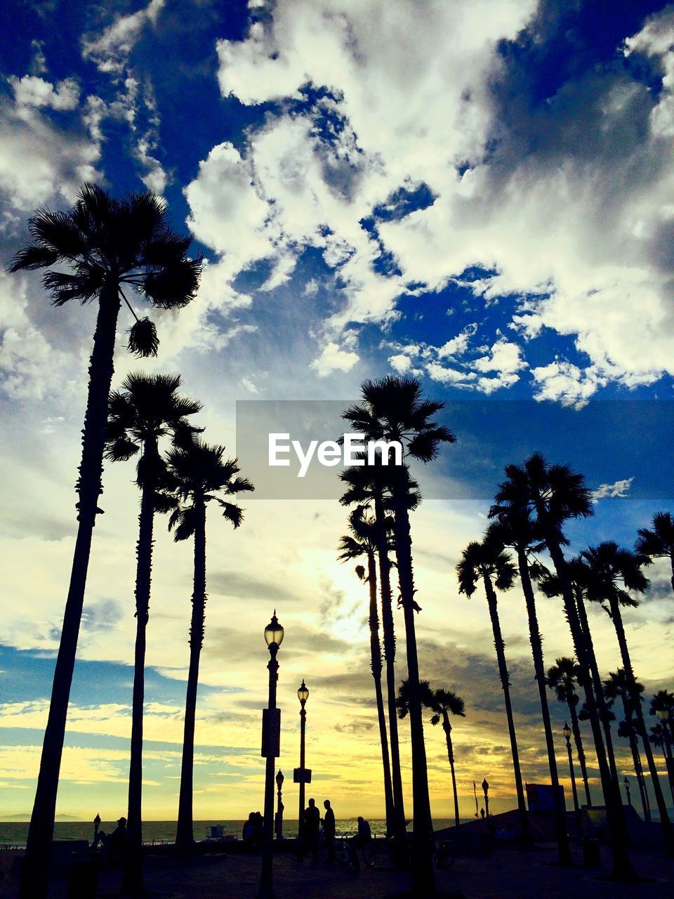 palm tree, tree, sky, cloud - sky, low angle view, travel destinations, silhouette, nature, outdoors, beauty in nature, tree trunk, no people, built structure, scenics, growth, sunset, day