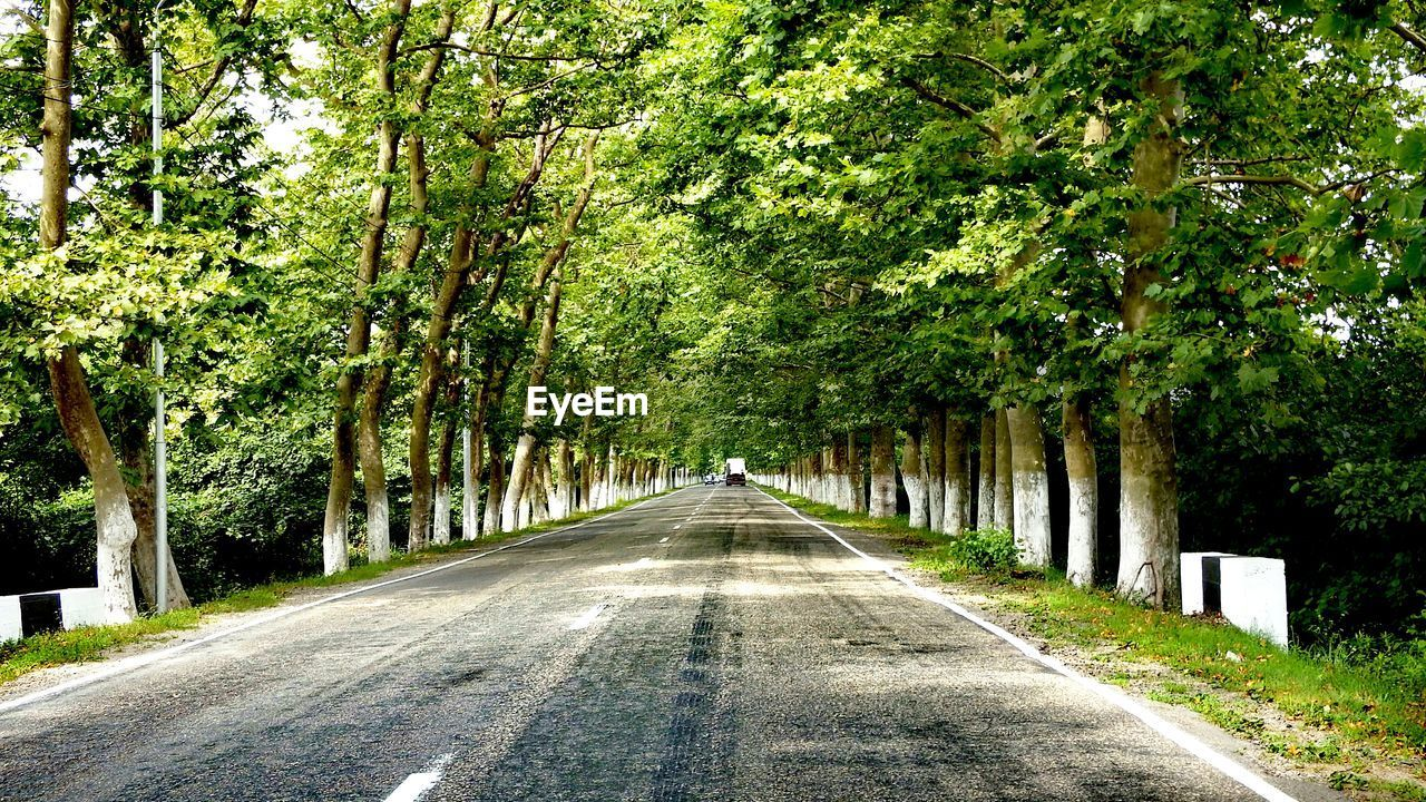 tree, the way forward, plant, direction, road, transportation, diminishing perspective, green color, day, growth, nature, no people, vanishing point, beauty in nature, symbol, treelined, outdoors, sign, tranquility, road marking