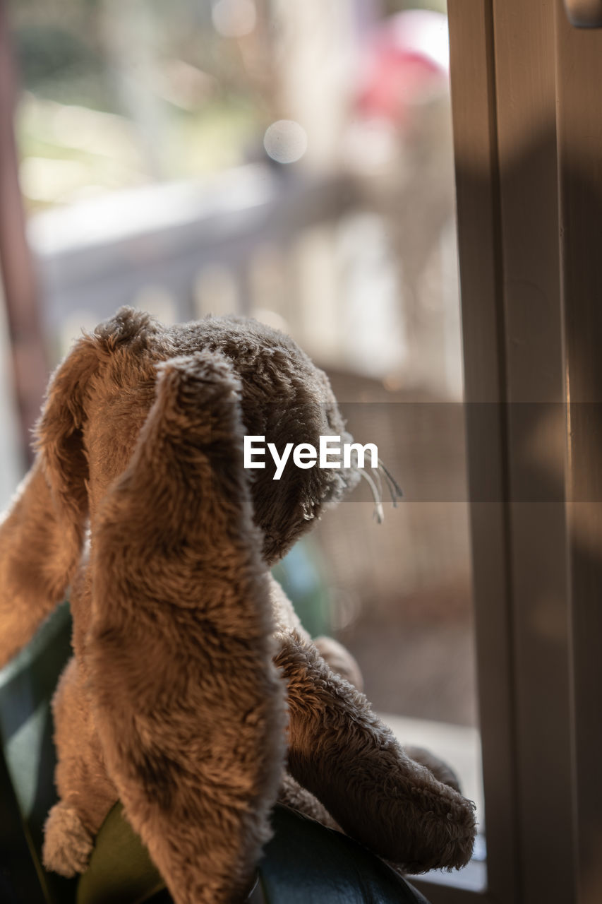 mammal, animal themes, domestic, one animal, domestic animals, animal, pets, vertebrate, dog, focus on foreground, canine, no people, brown, indoors, window, day, close-up, selective focus, home interior, looking, animal head