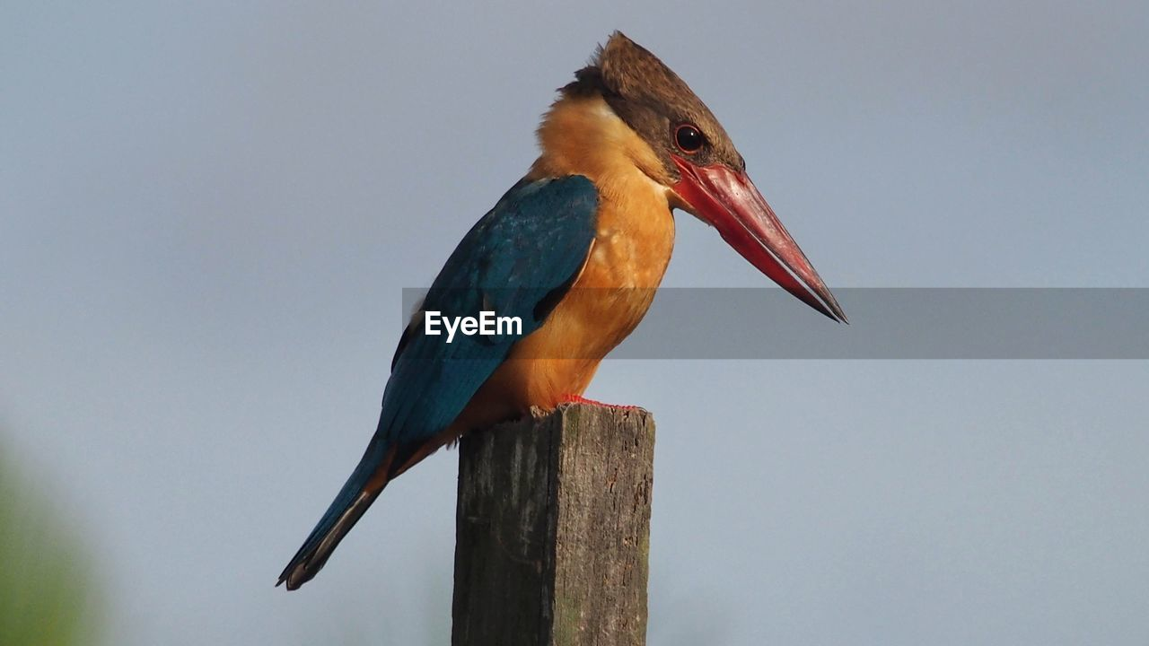 VIEW OF BIRD PERCHING ON WOODEN POST