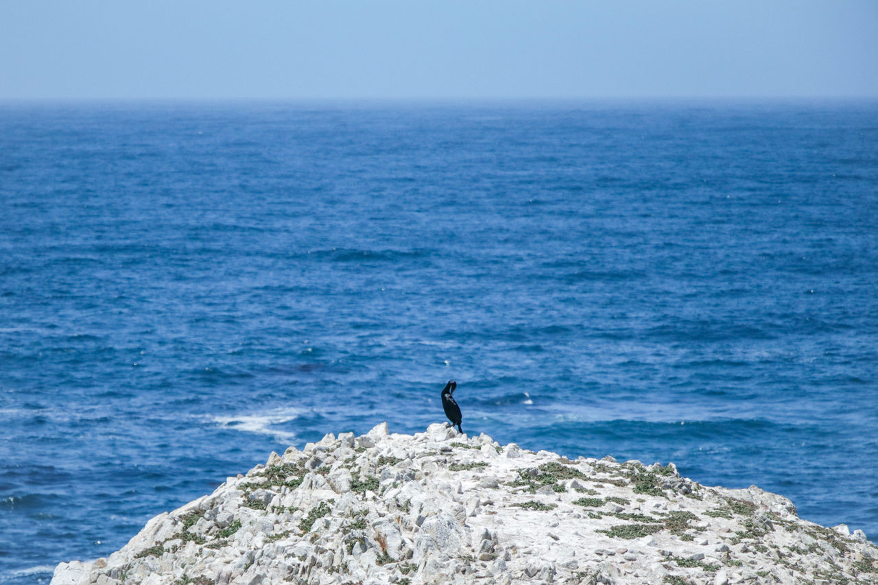 sea, water, horizon over water, horizon, sky, scenics - nature, beauty in nature, nature, day, rock, leisure activity, one person, blue, rock - object, standing, men, sport, clear sky, outdoors