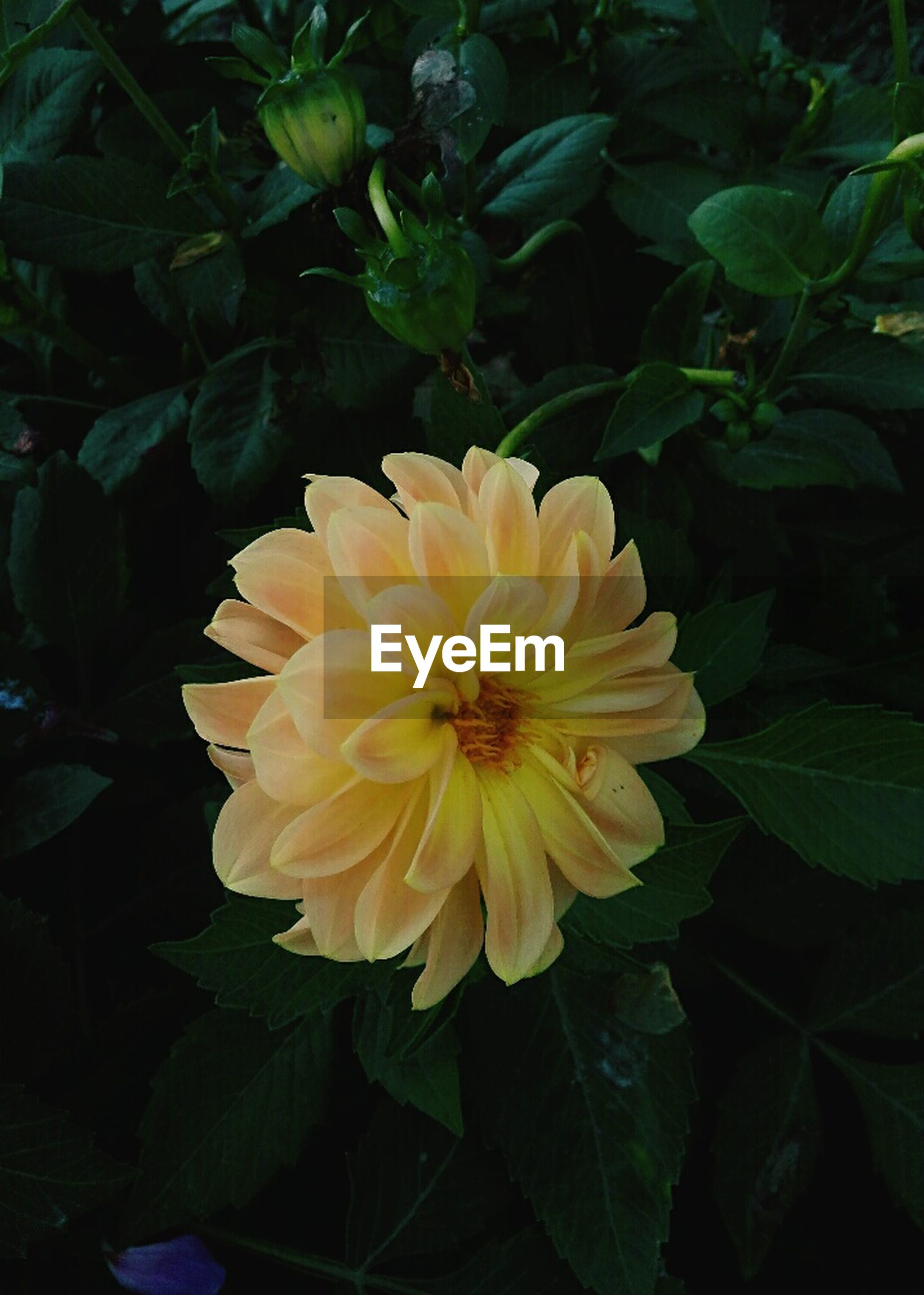 flower, petal, beauty in nature, fragility, nature, flower head, growth, plant, freshness, leaf, blooming, no people, yellow, close-up, outdoors, day