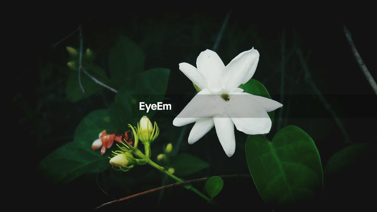 flower, petal, beauty in nature, freshness, fragility, nature, growth, plant, flower head, white color, green color, blooming, high angle view, leaf, no people, close-up, outdoors, day, animal themes, periwinkle
