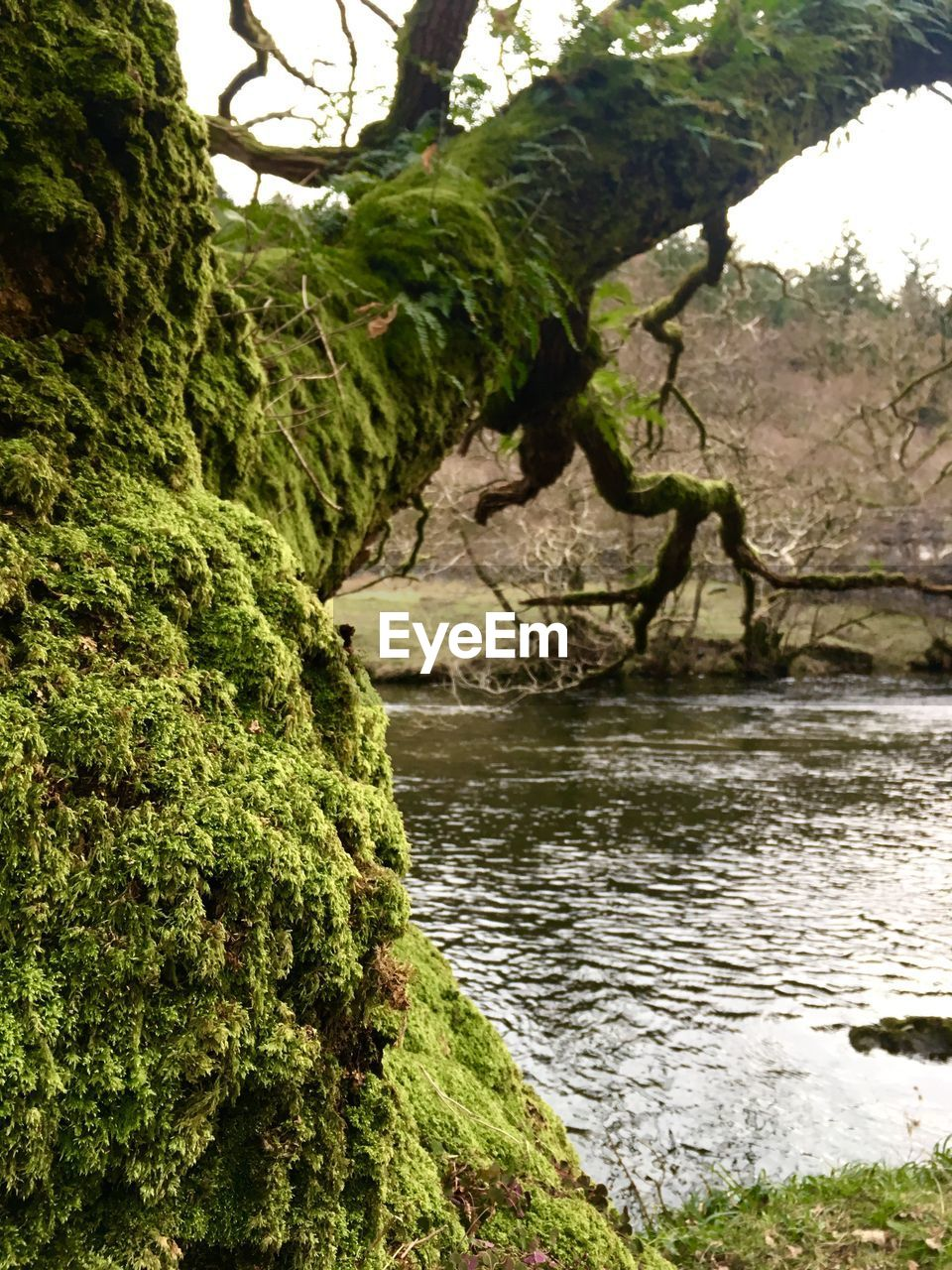 tree, nature, beauty in nature, water, tranquility, growth, no people, day, outdoors, tranquil scene, green color, branch, scenics, tree trunk, close-up, sky