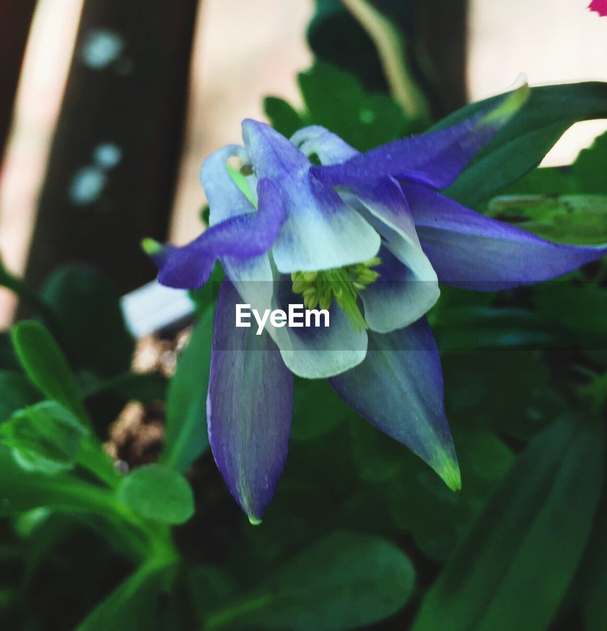 flower, fragility, petal, beauty in nature, growth, nature, freshness, plant, flower head, close-up, leaf, no people, day, purple, outdoors, blooming, iris - plant, springtime