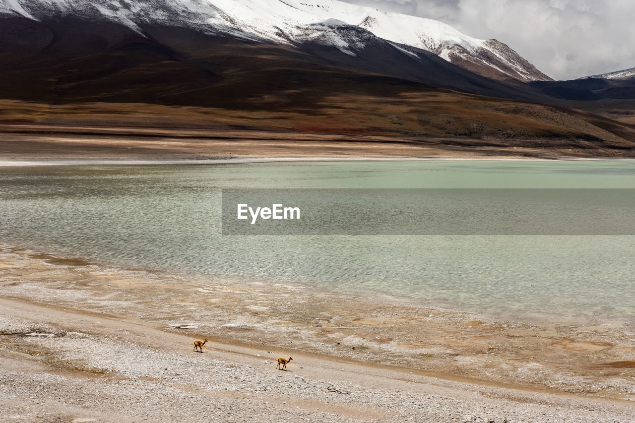 water, beauty in nature, scenics - nature, mountain, environment, tranquil scene, landscape, tranquility, nature, land, non-urban scene, day, no people, cold temperature, winter, snow, idyllic, sky, snowcapped mountain, mountain peak