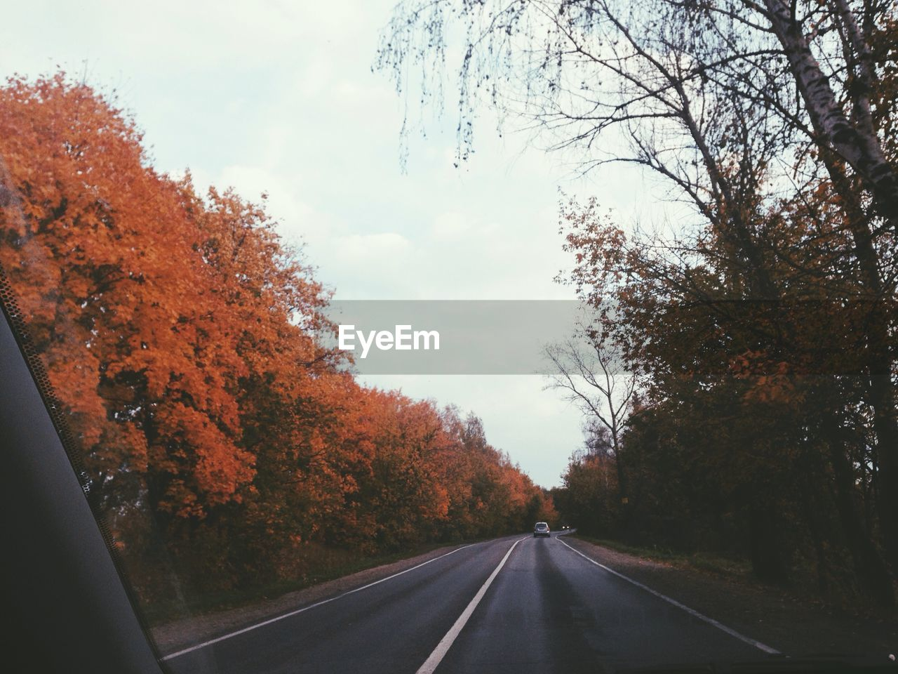 tree, road, the way forward, transportation, autumn, change, nature, sky, day, dividing line, car, no people, outdoors, leaf, beauty in nature, branch