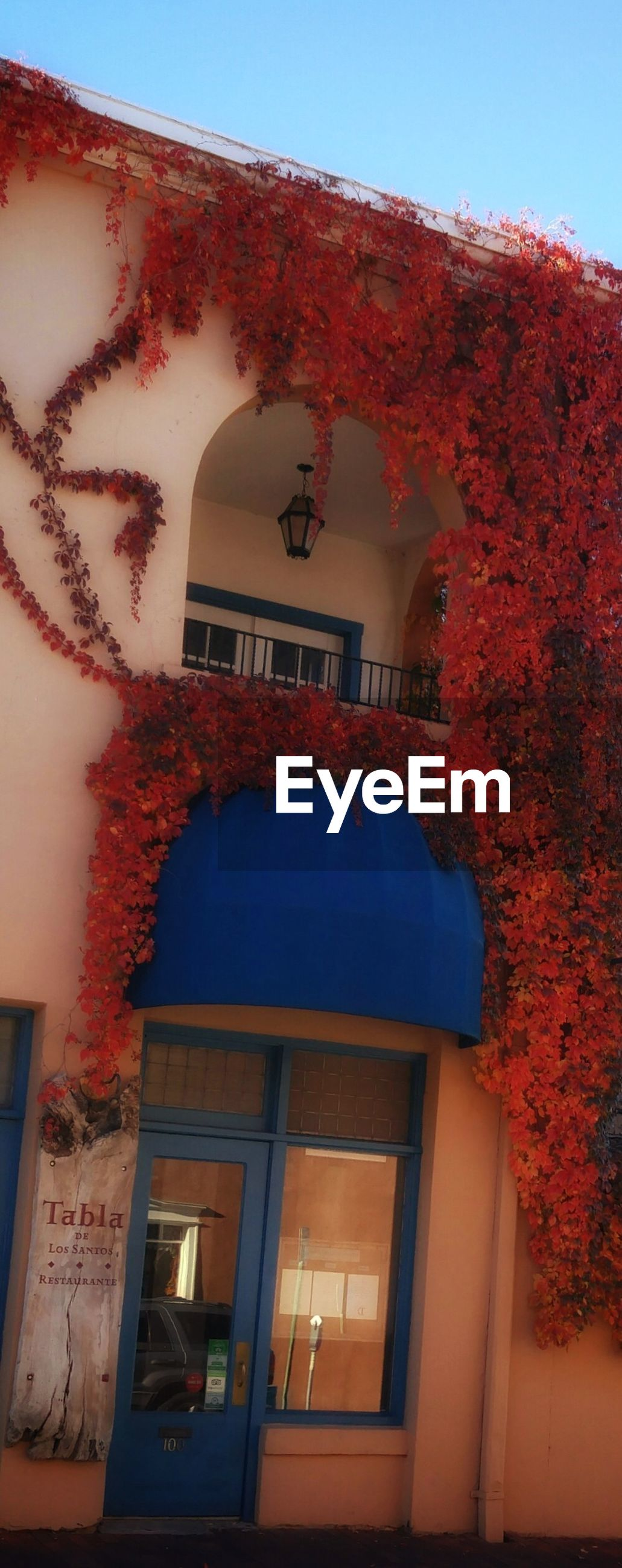 architecture, building exterior, built structure, no people, red, low angle view, outdoors, blue, tree, plant, growth, day, sky, nature, close-up