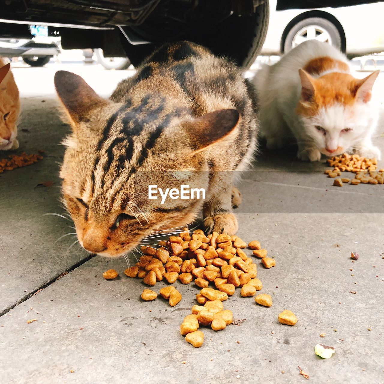 animal, pets, mammal, animal themes, domestic animals, domestic, cat, domestic cat, feline, vertebrate, one animal, no people, motor vehicle, car, food, mode of transportation, transportation, food and drink, day, whisker