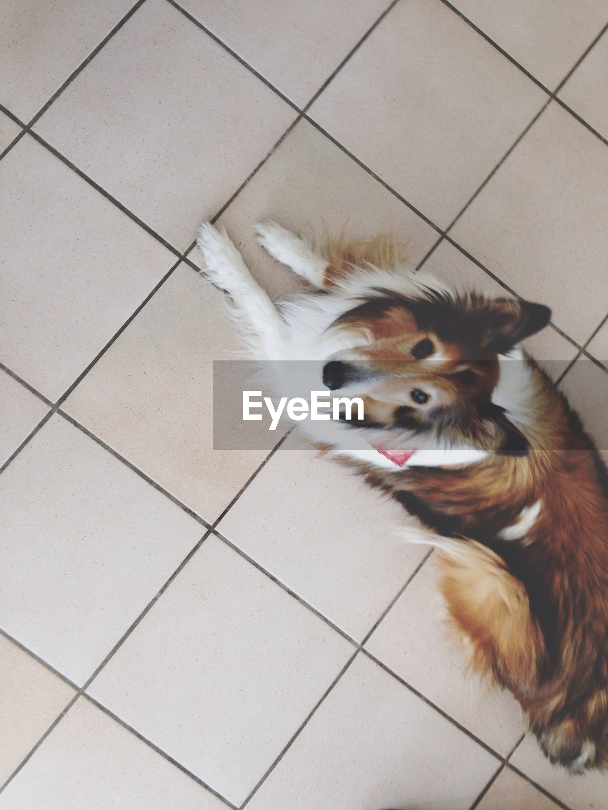 pets, domestic animals, animal themes, dog, one animal, mammal, high angle view, portrait, looking at camera, indoors, tiled floor, flooring, sitting, relaxation, cute, lying down, floor, puppy, no people, canine