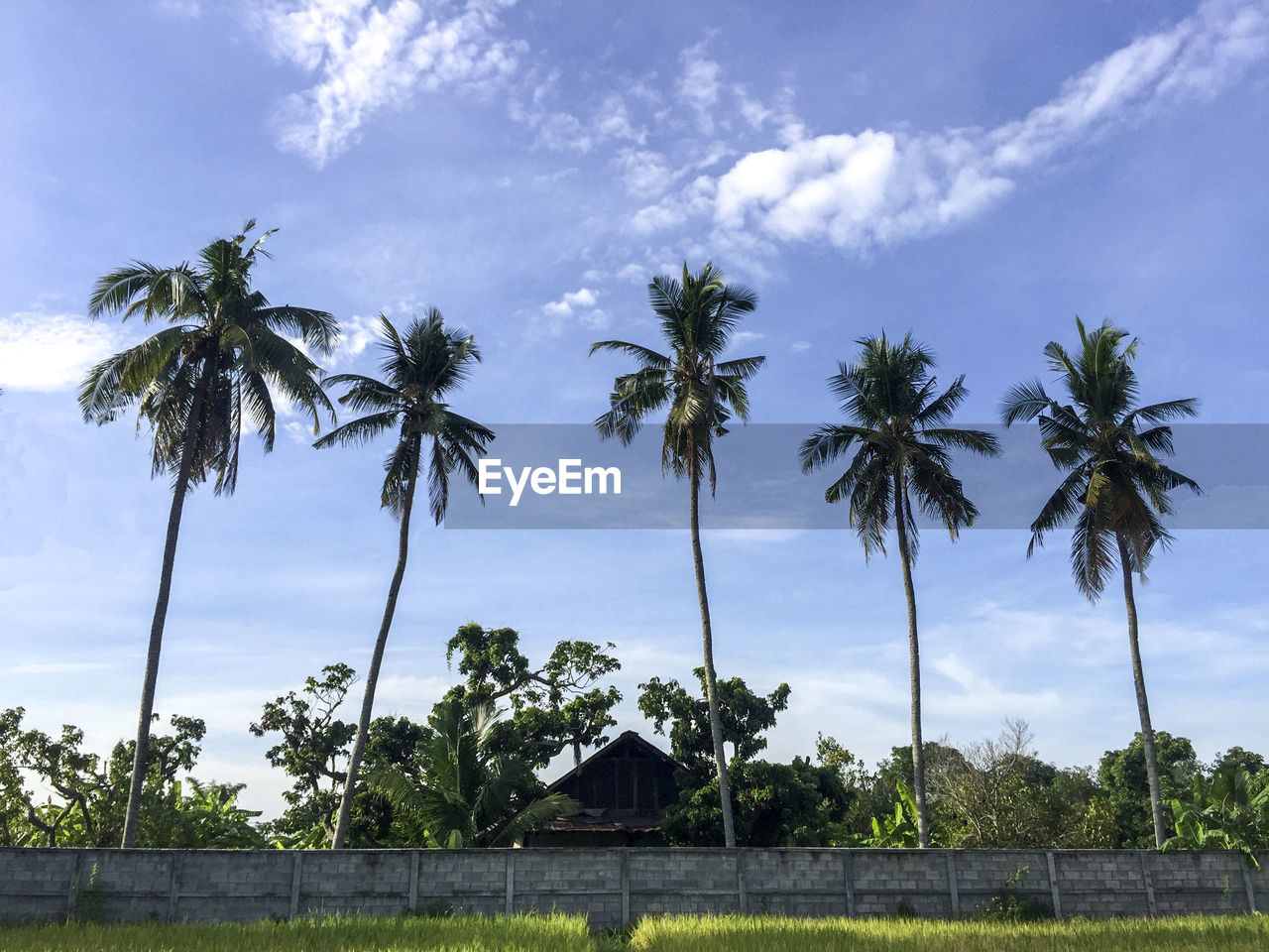 tree, sky, plant, palm tree, tropical climate, cloud - sky, growth, nature, beauty in nature, no people, low angle view, day, coconut palm tree, tranquil scene, tranquility, scenics - nature, outdoors, tall - high, built structure, architecture, tropical tree