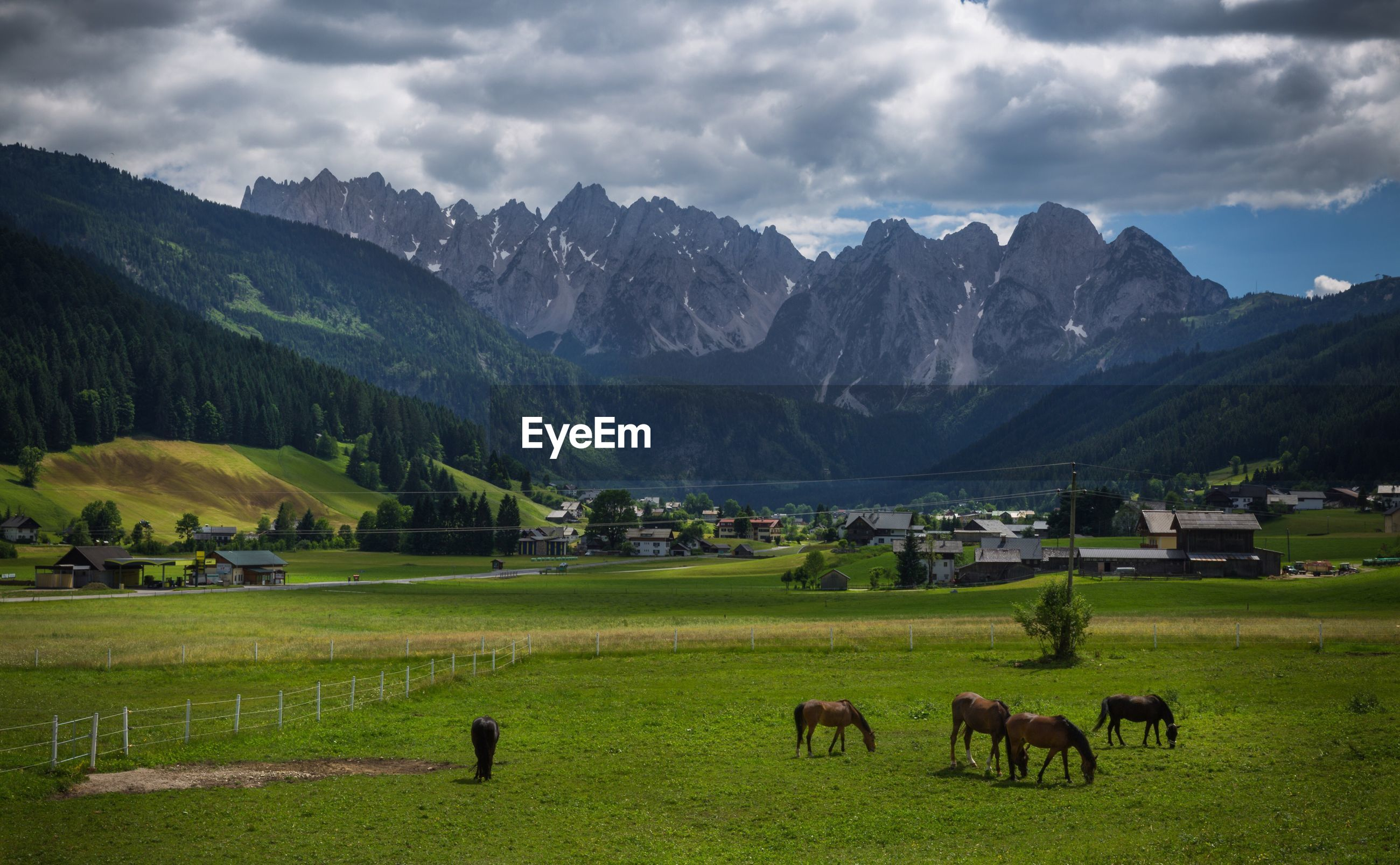 Horses grazing on field against mountains
