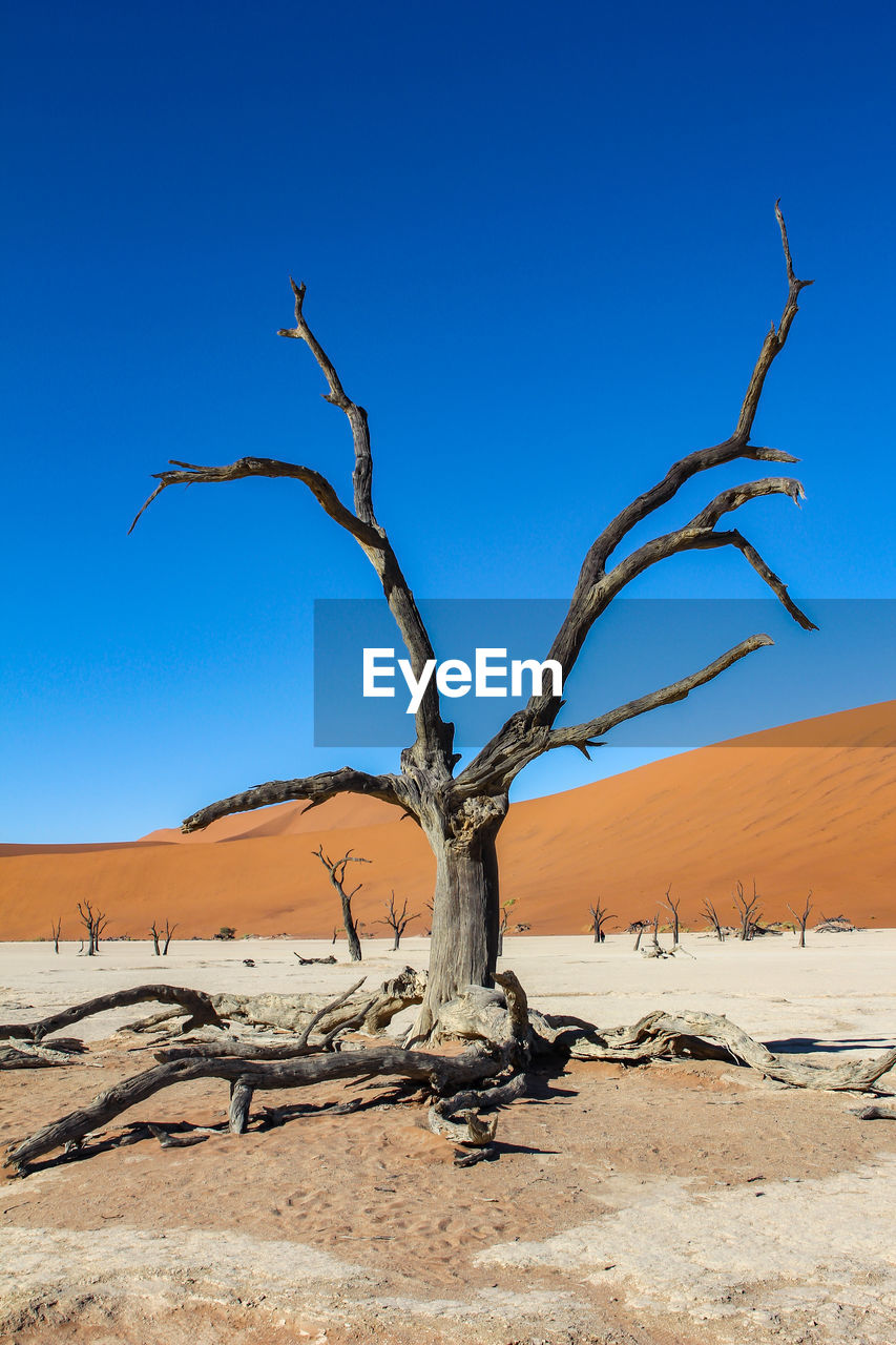 blue, sky, desert, bare tree, scenics - nature, landscape, tree, climate, environment, tranquility, tranquil scene, dead plant, arid climate, land, clear sky, plant, nature, no people, remote, sand, outdoors, driftwood