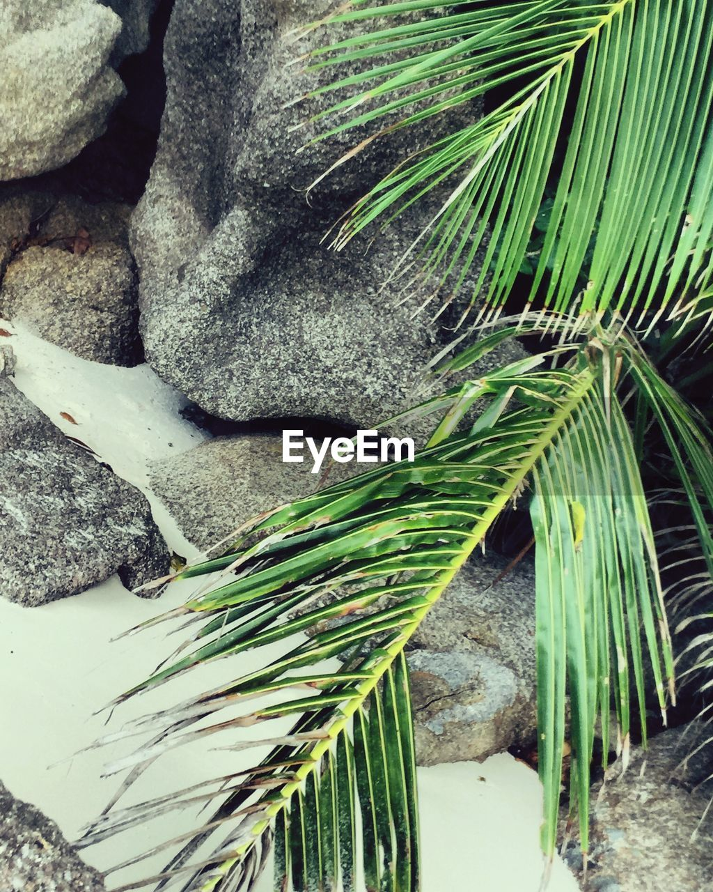 day, green color, outdoors, nature, no people, growth, palm tree, close-up, beauty in nature, freshness