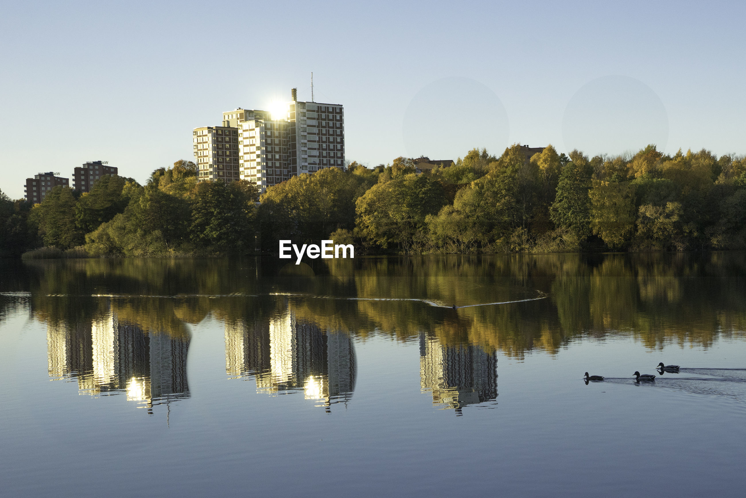 water, reflection, tree, sky, lake, waterfront, architecture, plant, built structure, nature, building exterior, clear sky, day, building, city, no people, beauty in nature, outdoors, tranquility, office building exterior, skyscraper