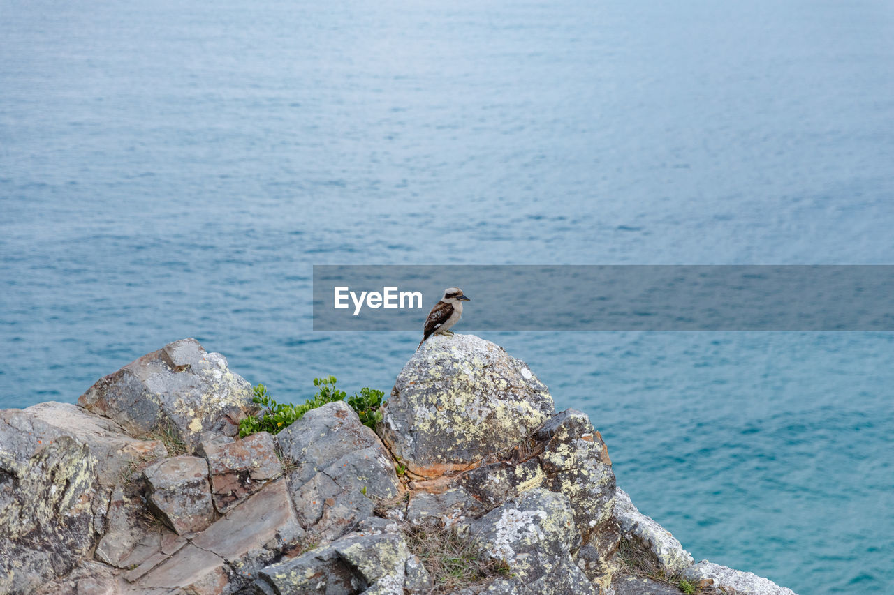 animal, animal themes, animals in the wild, animal wildlife, vertebrate, bird, one animal, sea, perching, rock, water, rock - object, solid, no people, nature, day, focus on foreground, beauty in nature, outdoors, seagull