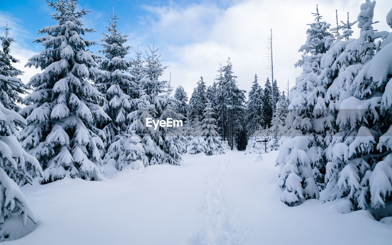 snow, cold temperature, winter, tree, plant, beauty in nature, sky, covering, nature, tranquility, white color, tranquil scene, no people, land, cloud - sky, scenics - nature, day, frozen, deep snow, pine tree, snowcapped mountain, coniferous tree