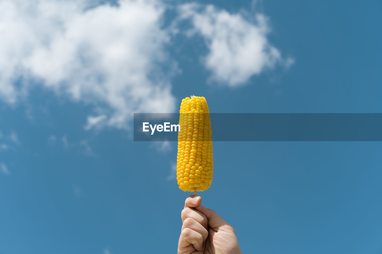 Close-Up Of Hand Holding Corn Against Blue Sky