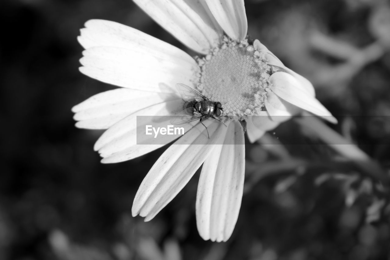 flower, petal, one animal, nature, fragility, beauty in nature, animal themes, flower head, insect, freshness, growth, plant, animals in the wild, focus on foreground, outdoors, close-up, day, no people, pollination, animal wildlife, blooming