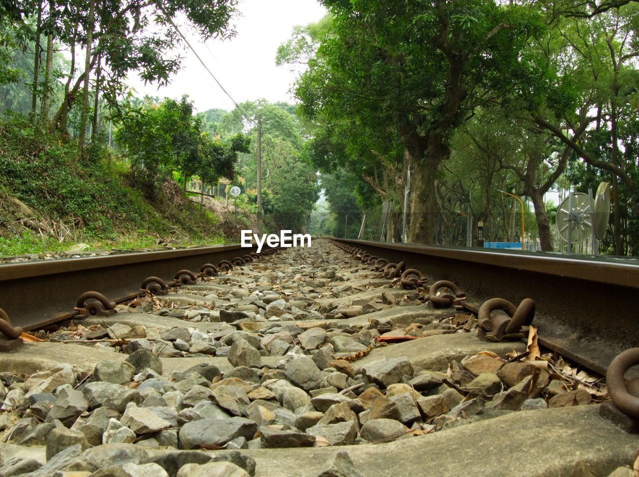 plant, tree, railroad track, rail transportation, track, transportation, solid, rock, no people, day, nature, rock - object, the way forward, direction, stone - object, diminishing perspective, growth, outdoors, gravel, connection, surface level, long