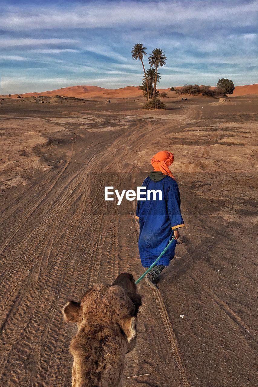Rear View Of Man Leading Camel In Desert