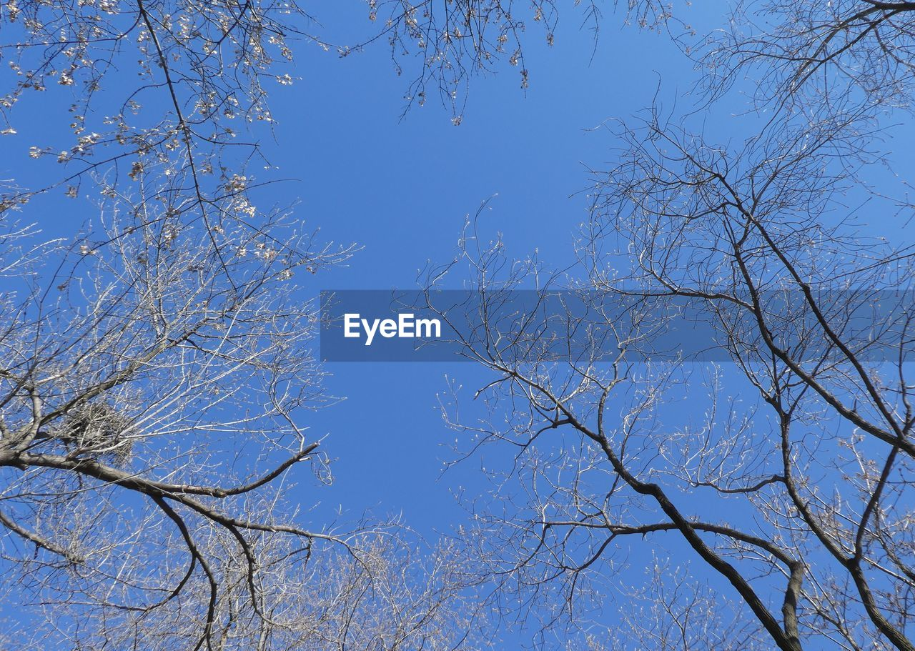 tree, sky, plant, branch, low angle view, blue, beauty in nature, clear sky, bare tree, no people, nature, tranquility, day, outdoors, growth, scenics - nature, tranquil scene, sunlight, white color, autumn, tree canopy