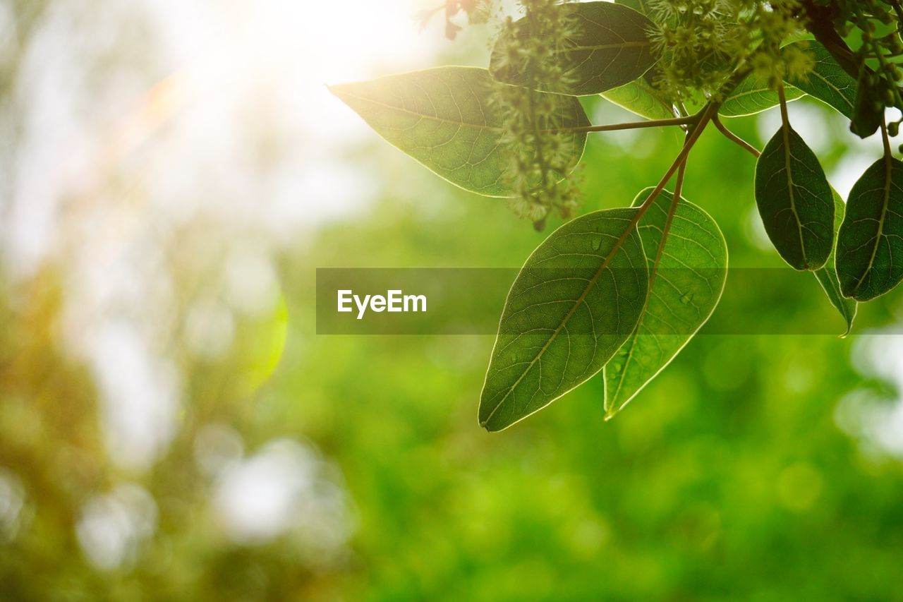 leaf, plant part, green color, plant, close-up, growth, nature, focus on foreground, beauty in nature, no people, day, tree, sunlight, selective focus, outdoors, tranquility, leaves, leaf vein, freshness, branch