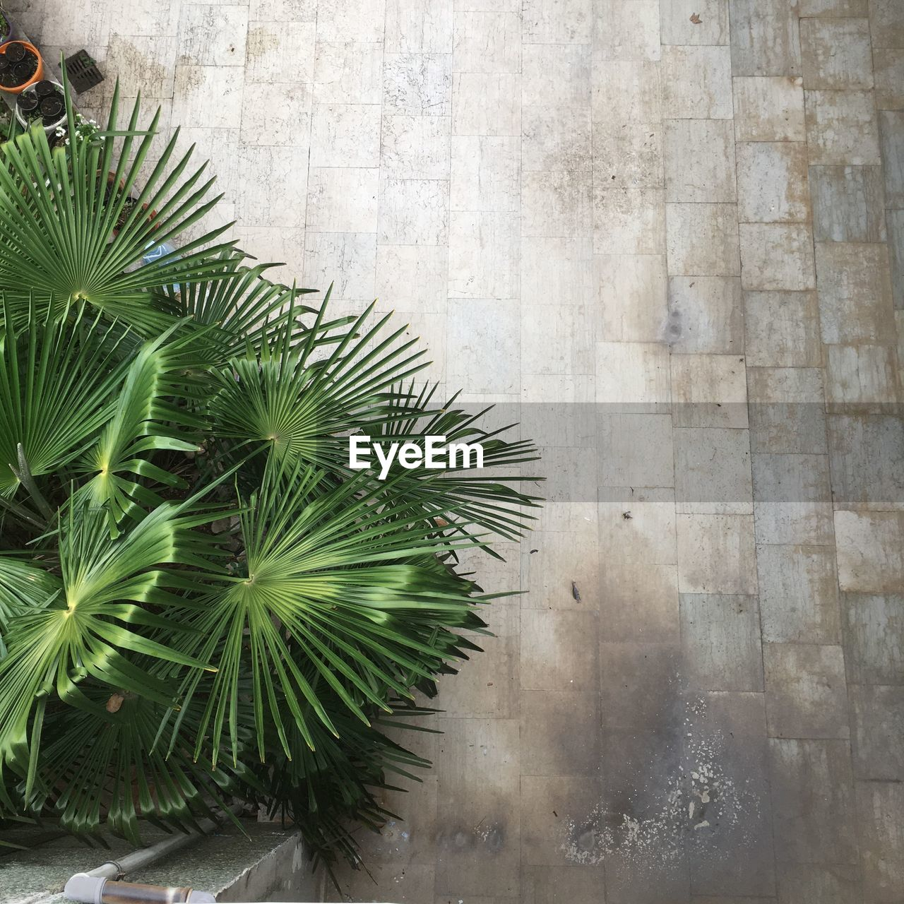 HIGH ANGLE VIEW OF PALM TREE BY PLANT