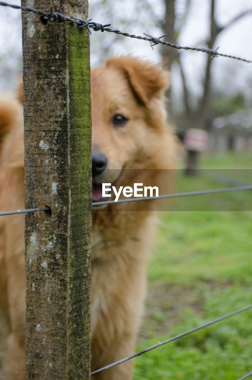 dog, pets, domestic animals, one animal, mammal, animal themes, grass, focus on foreground, day, outdoors, no people, german shepherd, nature, close-up, tree
