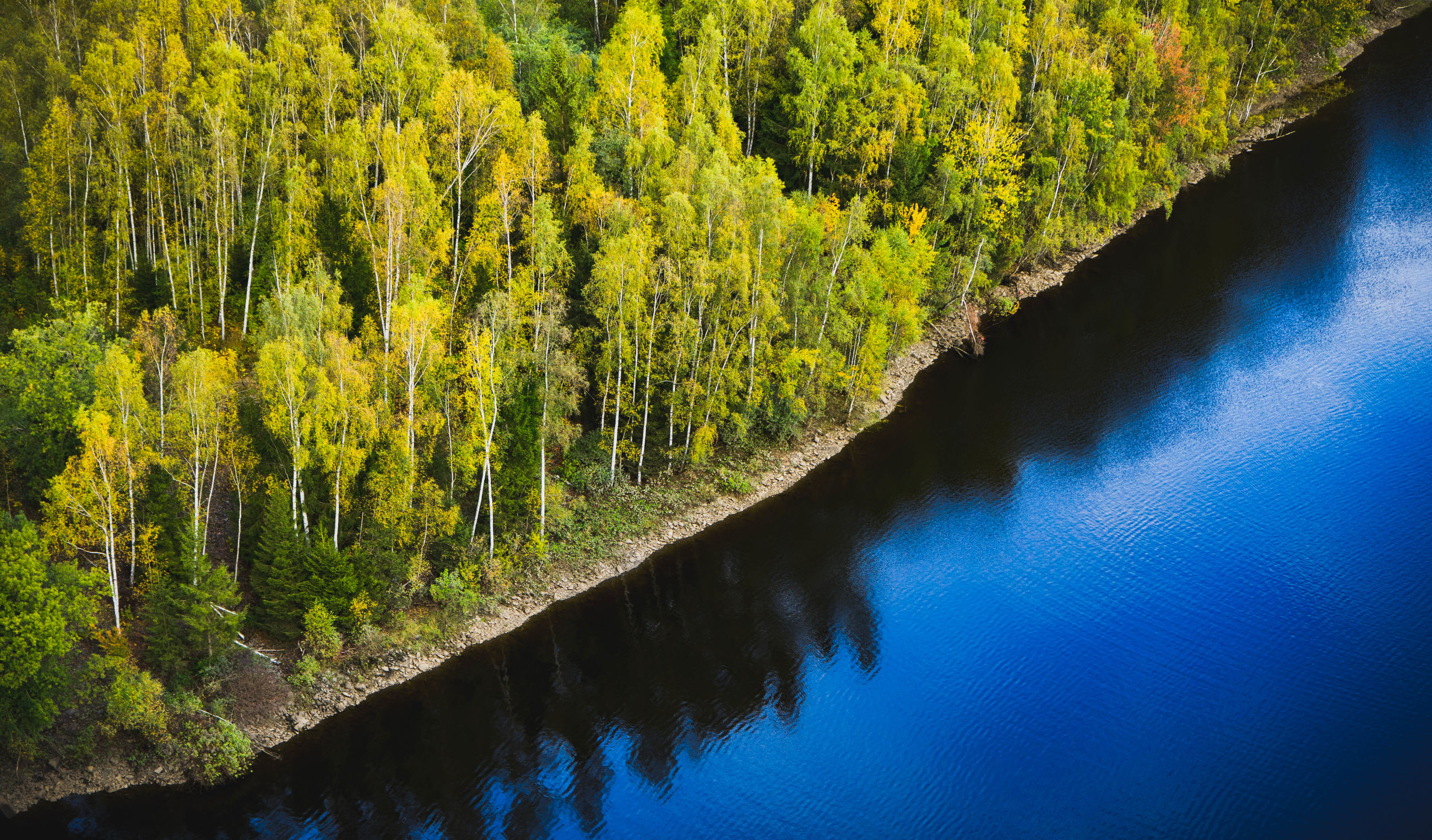High angle view of trees growing by lake