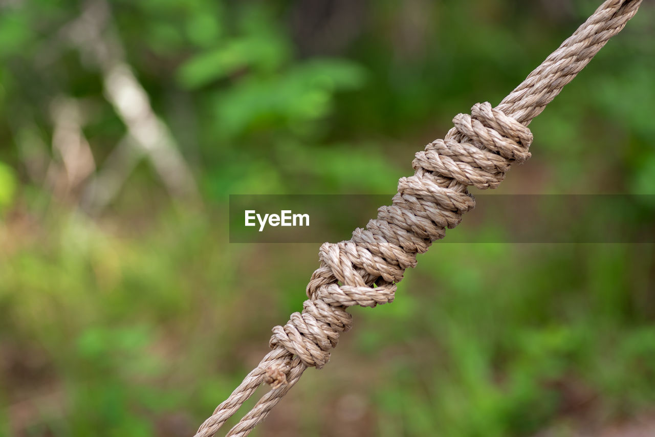 CLOSE-UP OF ROPE ON TREE