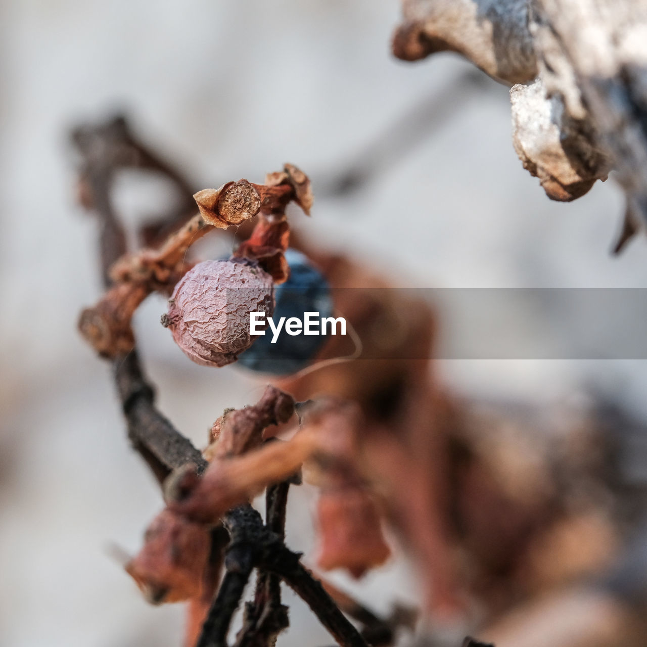close-up, focus on foreground, dead plant, fragility, nature, dried plant, day, no people, outdoors, freshness