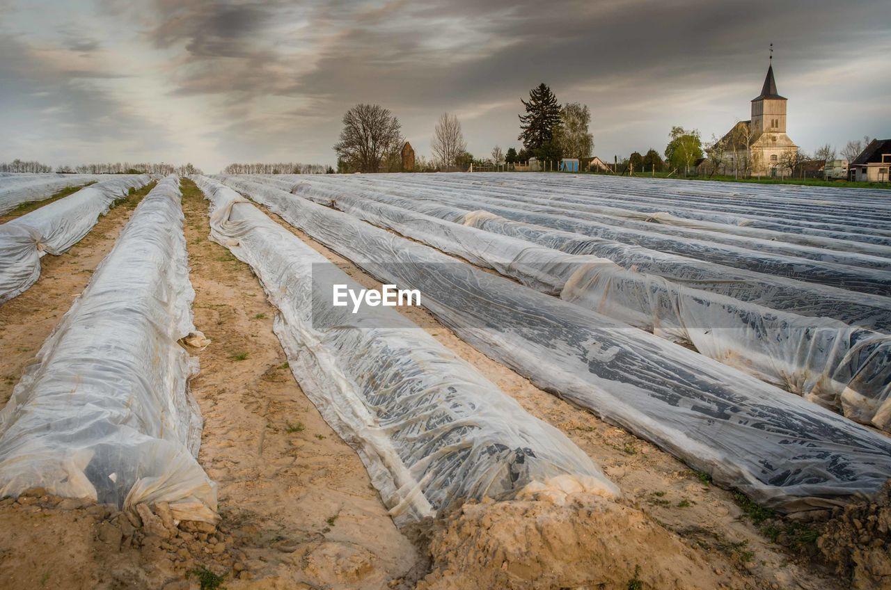 Asparagus field against cloudy sky