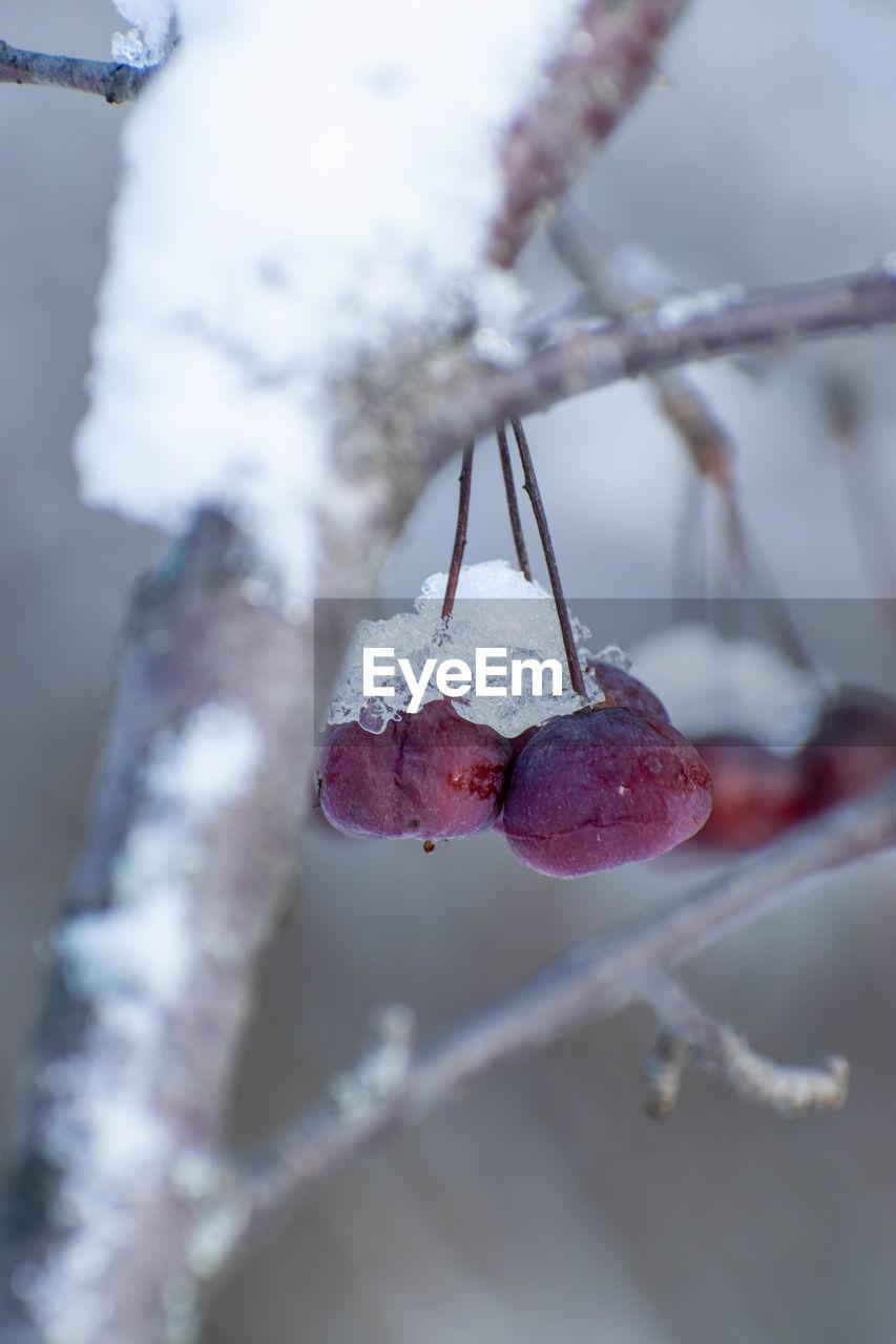 CLOSE-UP OF ICE CREAM ON TREE