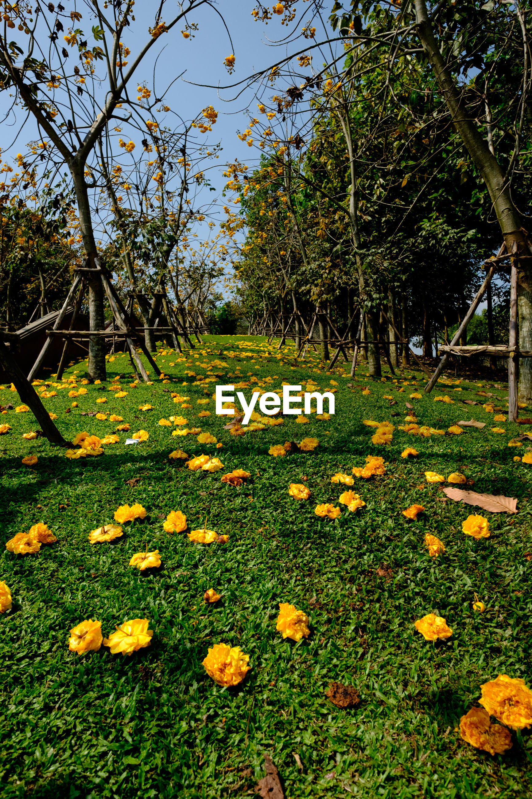 SCENIC VIEW OF FLOWERING PLANTS AND TREES IN FIELD