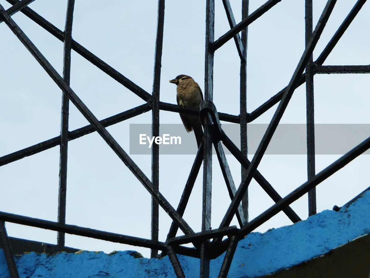 bird, animals in the wild, perching, animal themes, one animal, animal wildlife, low angle view, day, no people, outdoors, nature, sky