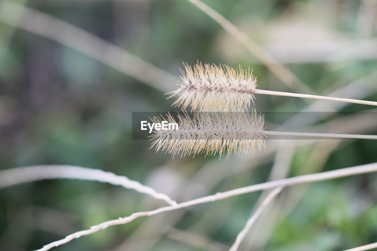 plant, beauty in nature, growth, flower, focus on foreground, fragility, flowering plant, close-up, vulnerability, day, freshness, nature, no people, outdoors, field, selective focus, tranquility, plant stem, white color, softness, flower head