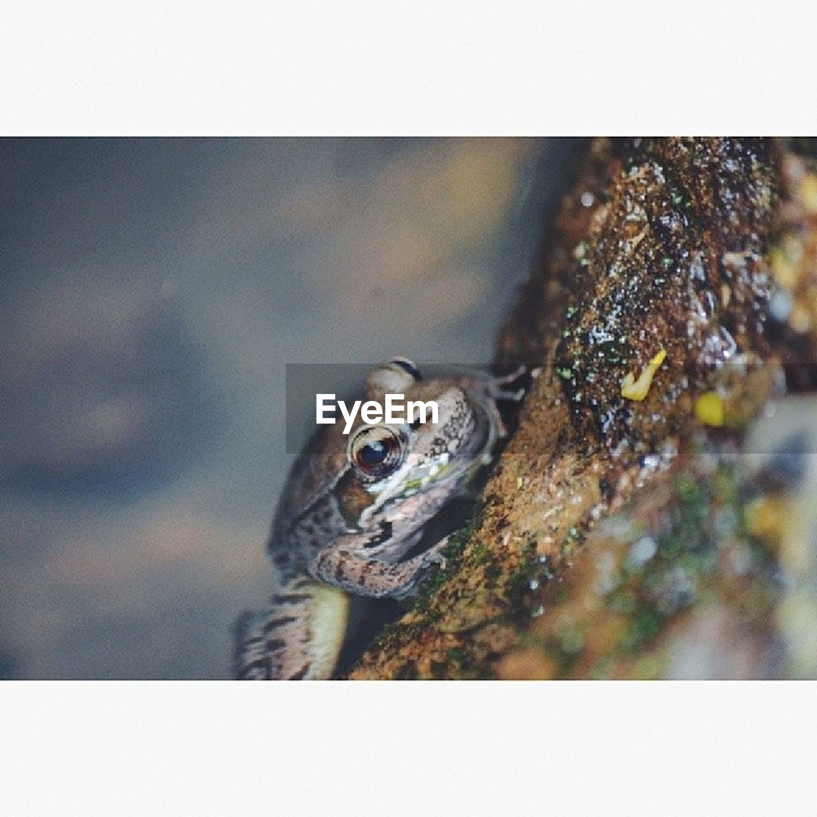 animal themes, one animal, animals in the wild, wildlife, transfer print, close-up, frog, reptile, auto post production filter, selective focus, amphibian, nature, turtle, focus on foreground, day, outdoors, zoology, no people, animal head, rock - object