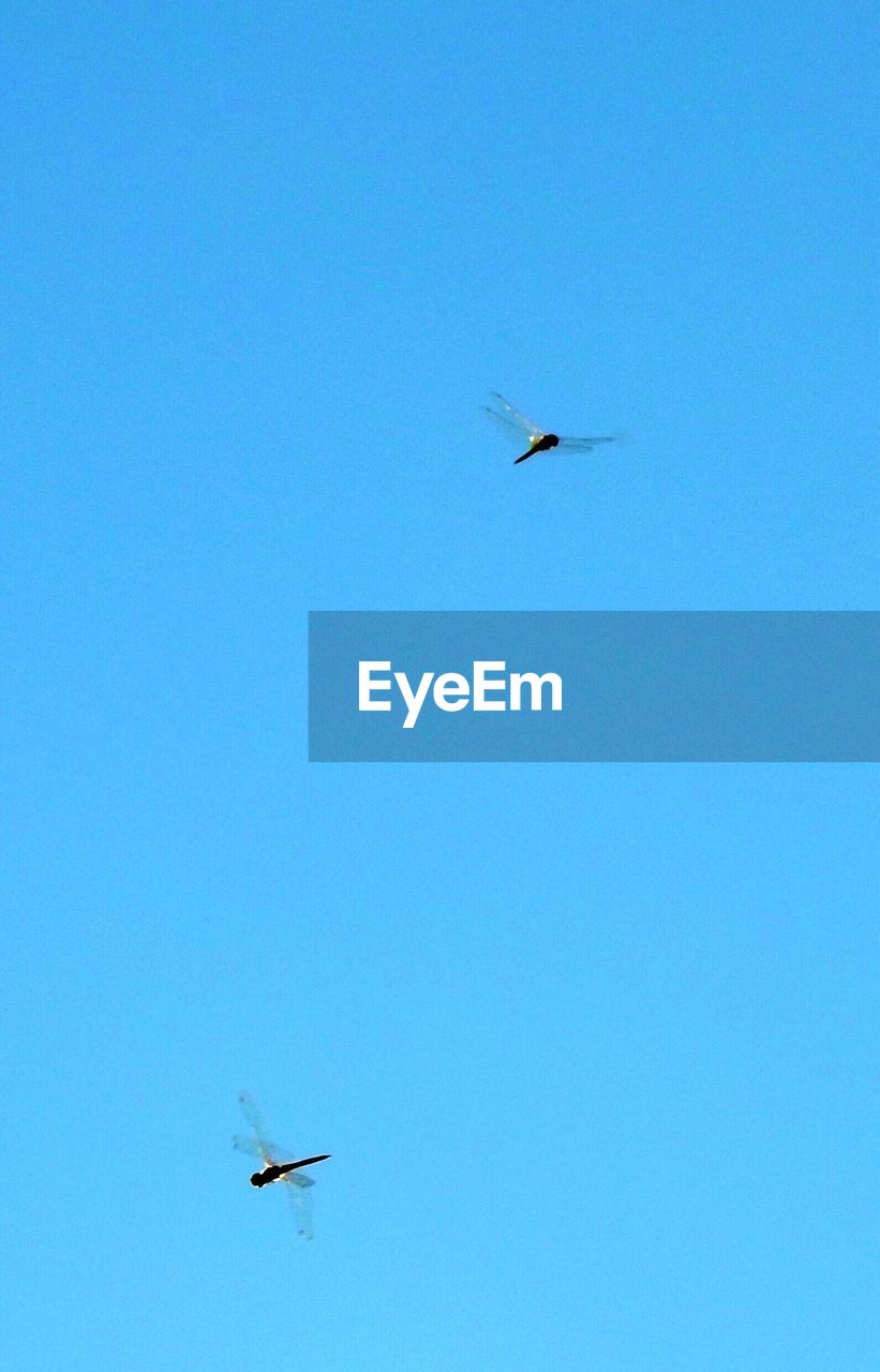 flying, clear sky, blue, low angle view, copy space, bird, mid-air, animals in the wild, animal themes, no people, outdoors, day, animal wildlife, spread wings, airplane, nature, beauty in nature, sky