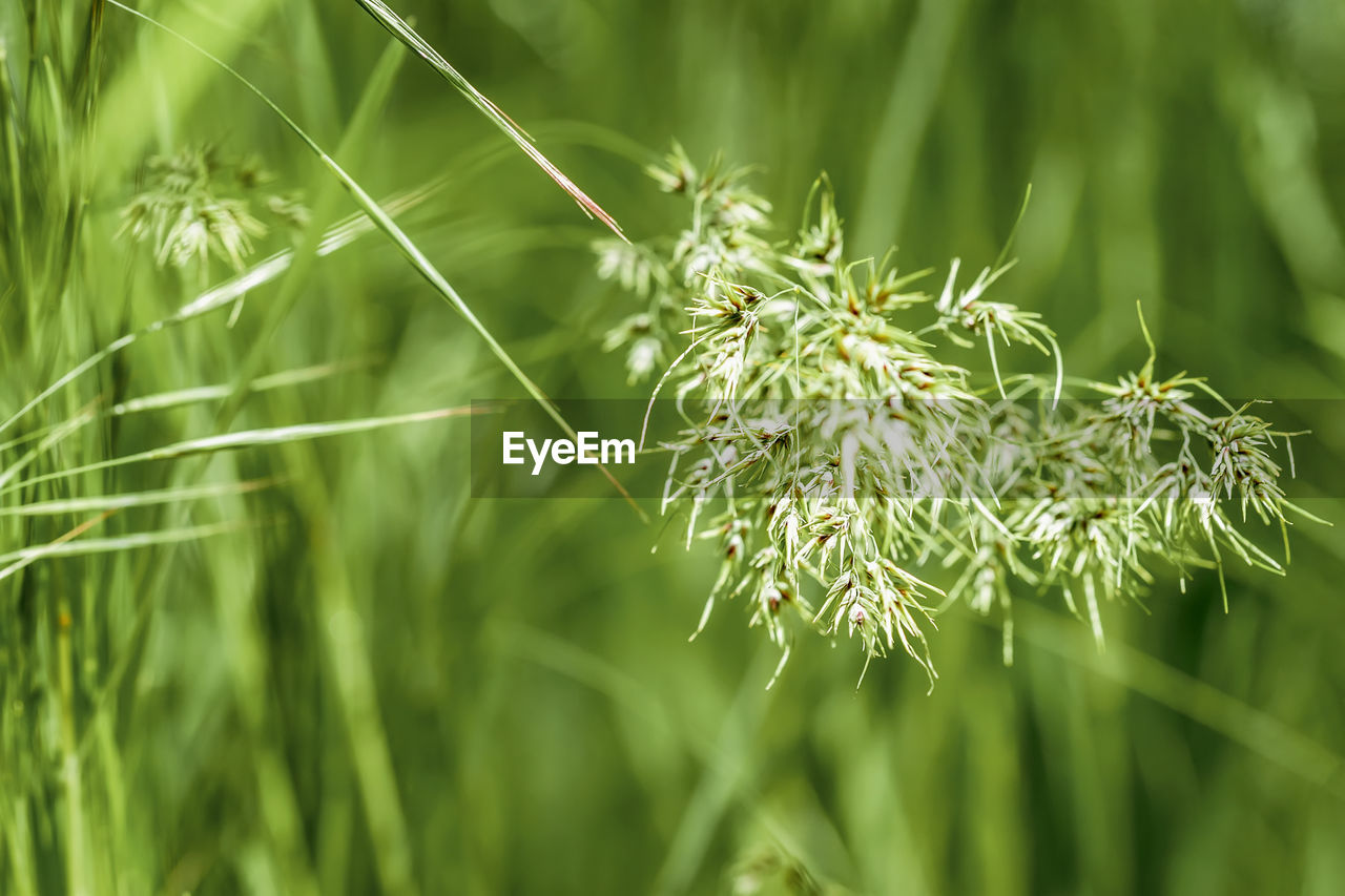 plant, growth, green color, beauty in nature, nature, close-up, day, focus on foreground, no people, selective focus, fragility, vulnerability, tranquility, outdoors, flower, flowering plant, grass, freshness, land, plant part